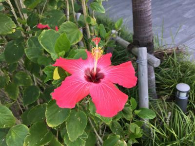 沖縄 ヒルトン北谷リゾートスイートルームを楽しむ旅