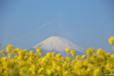 ♪早咲きの菜の花+富士山+相模湾♪=二宮町・吾妻山公園