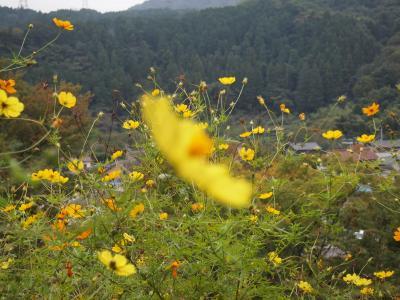 秋川渓谷日帰りの旅
