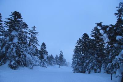宮城蔵王~樹氷見学の予定が地吹雪体験へ