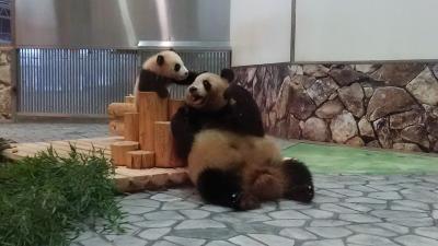 パンダに会いに極寒のアドベンチャーワールドへ
