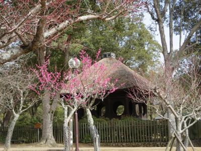 母と行く奈良県立美術館「祈りの美」☆友達の命日に片岡梅林を歩きながら、思い出にひたる・・・