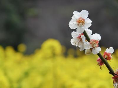 黄色と薄ピンク イン 浜離宮庭園