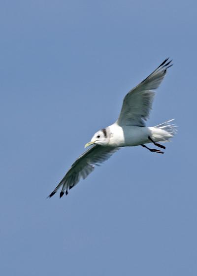 野鳥撮影記録(2017年3月)その1・漁港巡り