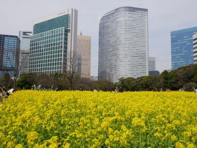 東京汐留・菜の花の浜離宮恩賜庭園~遅咲きの池上梅園を訪れて