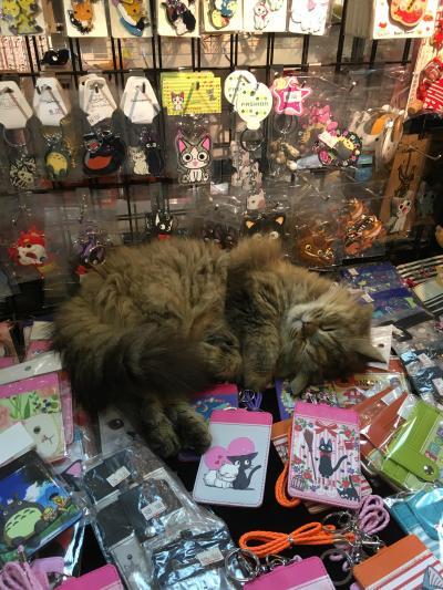 息子と台湾; 高速鉄道体験と、猫を訪ねて猫村へ (後編)