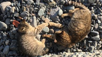 ねこ島探訪記□17年早春~福岡・相島ののんびりネコさん