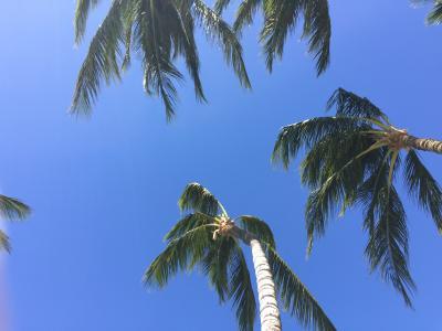 ハワイ島でのんびり③