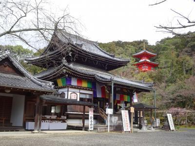 啓蟄末候(菜虫化蝶)の京都へ2、今熊野観音寺、六角堂から革堂へ