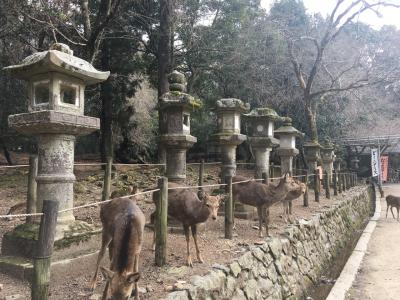 奈良 世界遺産歩き♪ ちょこっと大阪