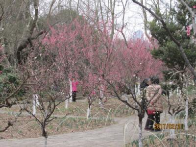 上海の魯迅公園・梅園