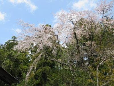 南紀1泊2日☆熊野三山と洞窟温泉