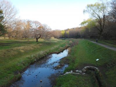 都立公園を走ってはしご お花見ラン