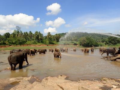 スリランカ自由旅行11日間 ⑤ダンブッラ、キャンディ、コロンボ