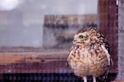 どんどん ロンドン 5日目 ロンドンから飛び出して猛禽類と戯れる!