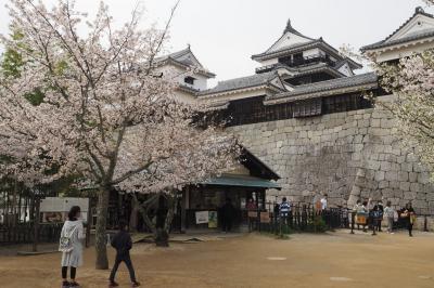城山に行ってきた!桜が満開でした(^^♪(松山城)