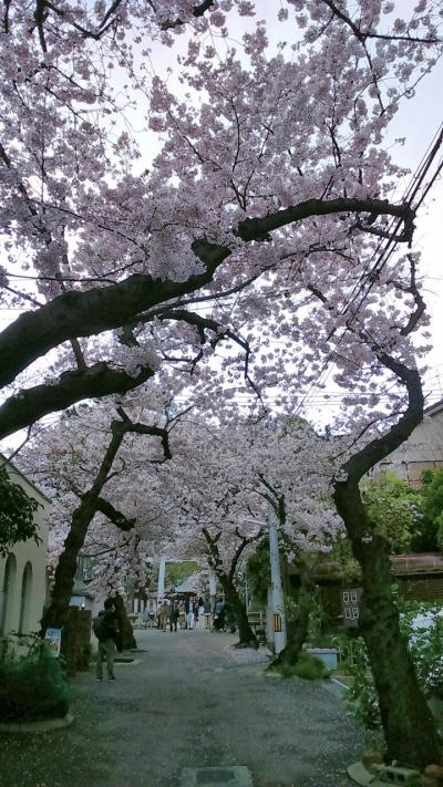 地元でチューリップと桜