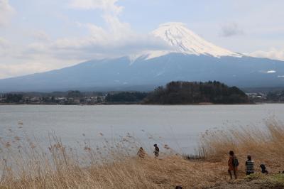 富士山と桜の花を愛でるはずだった旅(1日目の富士五湖編)