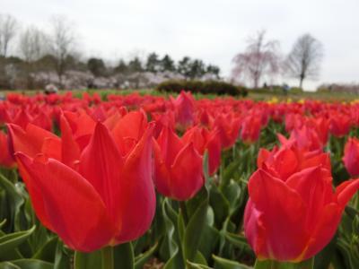 春色いっぱいの昭和記念公園