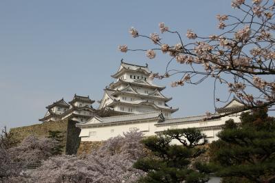 旅するイルカ♪ 姫路城 桜へ