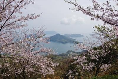 今年もやっぱり紫雲出山へ桜を愛でに。