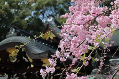 ようやく春めいた京の街を徘徊する。桜、御朱印、風景印、撮り鉄・・外国人パワーに圧倒される。