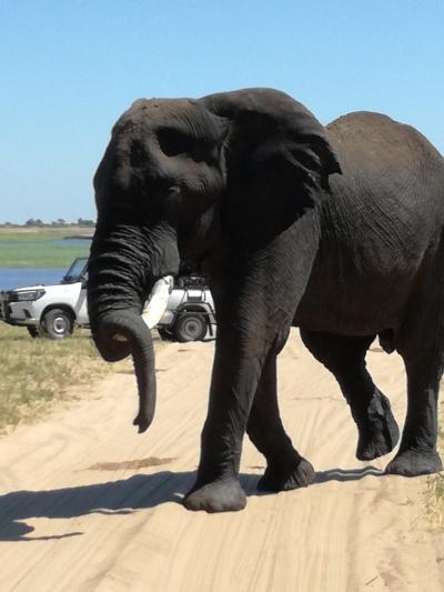 南部アフリカ 3世代旅行①(南アフリカ)