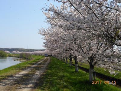 美嚢川の桜並木