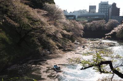 桜は散り始めですが神保町から千鳥ヶ淵までぶらり