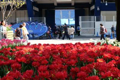 春の横浜公園 愛でる人 写す人 写される花達 「全国都市緑化よこはまフェアー」