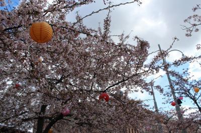 ヨーテボリの桜 Järntorget