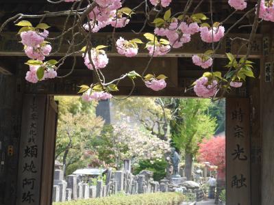 春の鎌倉①☆光触寺・明王院・浄妙寺・報国寺☆2017/04/20