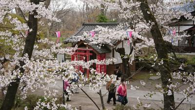 懐古園 小諸に来たらここしか無い! 桜の名所で桜ざんまい!