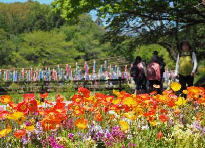 里山ガーデン 森の花園はためく鯉のぼり【ガーデンネックレス横浜2017】