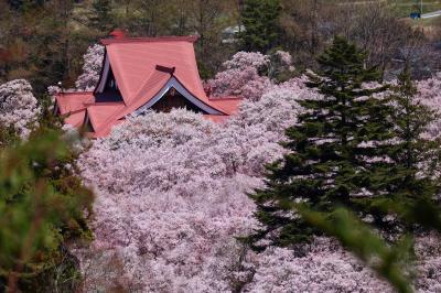 """ブララブコー 「桜を追いかけ""""天下第一のさくら""""高遠城址公園ドライブ旅」"""