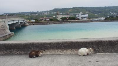 毎年恒例!沖縄(4泊5日)5日目 絶景カフェに行ってみた!