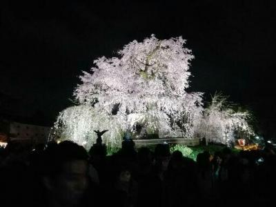 京都の桜 2017