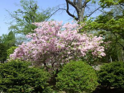 花の札幌 北海道大学