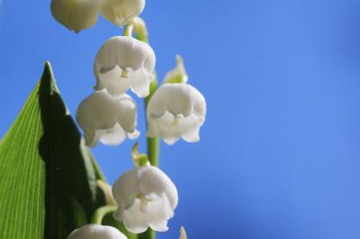 ゴールデンウィークは地元埼玉で過ごそう!(3)森林公園の都市緑化植物園編:思った以上に素敵だった江戸さくらそう展から春と初夏の花で輝くハーブガーデンと途中までのボーダーガーデン