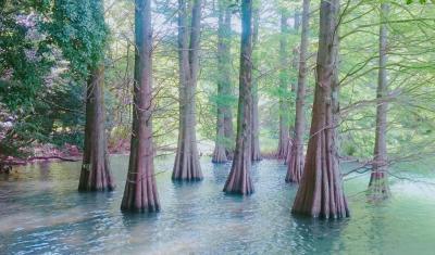ジブリの森を訪ねる散歩旅 in 篠栗九大の森