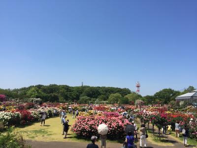 京成バラ園~色彩と香りの花園