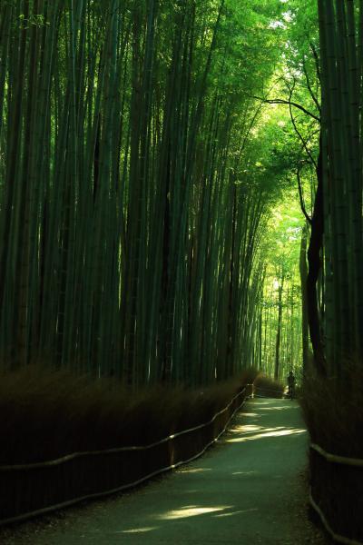 京都 嵯峨野竹林の道、蓮華寺、酬恩庵一休寺
