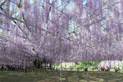 GWは花を見に<2> 「あしかがフラワーパーク」の藤と圧倒的な花々