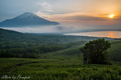 2017年山中湖ロッジ滞在記(3) 絶滅危惧種の野生の花を見たり、雲がかかった富士山を眺めたり・・・
