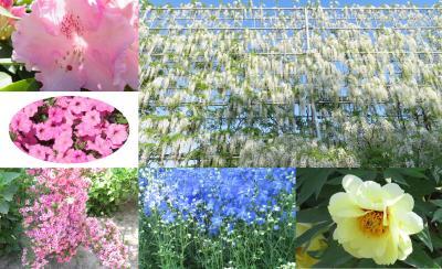 栃木・あしかがフラワーパーク ⑧「その他の藤」やいろいろな花々