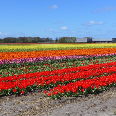 春のオランダ Day1 アステルダム・ハイネケンエクスペリエンス