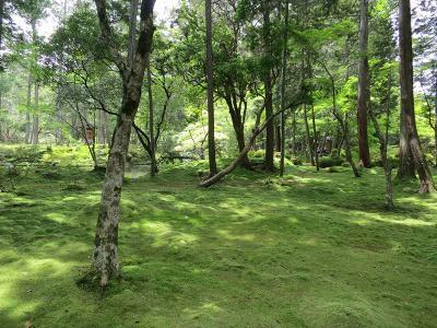 苔寺・鈴虫寺と松尾大社を巡る旅