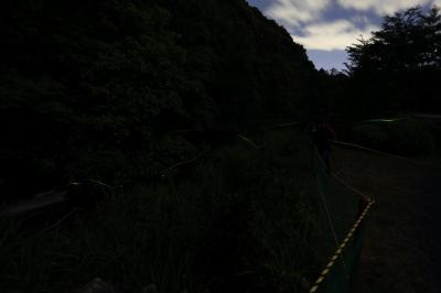 2017 源氏蛍 in 鈴鹿ほたるの里
