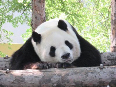 北京へ…念願の「万里の長城と天安門」  1日目 天壇公園 3-1