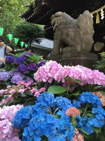 第33回文京あじさい祭りで白山神社に行ってきました。